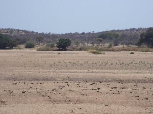 Tuli Zimbabwe (ZW)