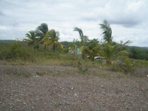 Piparo Trinidad and Tobago (TT)