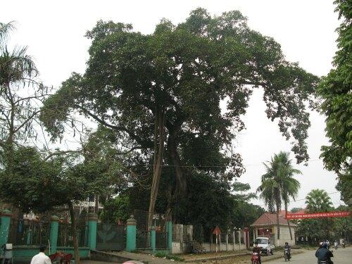 Thắng Vietnam (VN)
