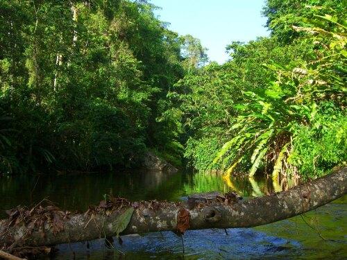 Grande Riviere Trinidad and Tobago (TT)