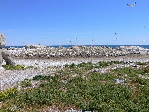 Lamberts Bay South Africa (ZA)