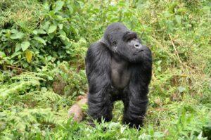 best vacation spots in Rwanda