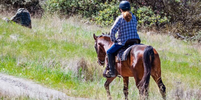 trip to horse trail|horse trails travel planner app