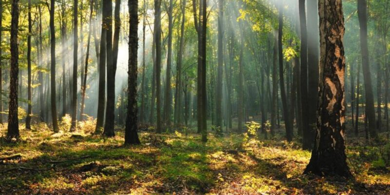 trip to forest|wood|woods|forests travel planner app